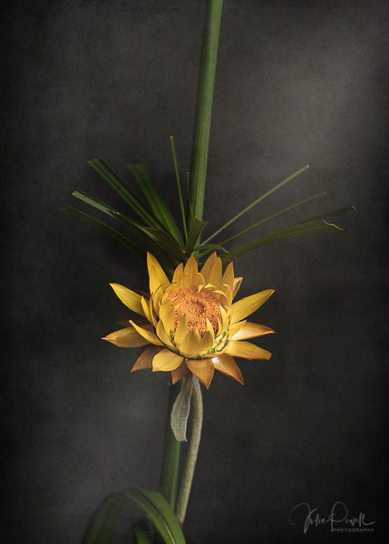 Julie Powell_Ikebana-4