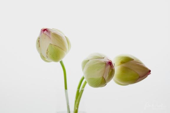 Julie Powell_Lotus-1