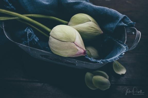 Julie Powell_Lotus-19