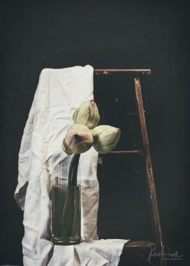 Julie Powell_Lotus-21
