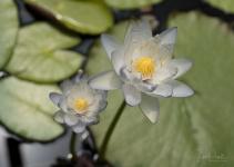 Julie Powell_Lotus-38