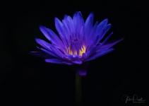 Julie Powell_Lotus-39