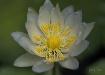 Julie Powell_Lotus-41