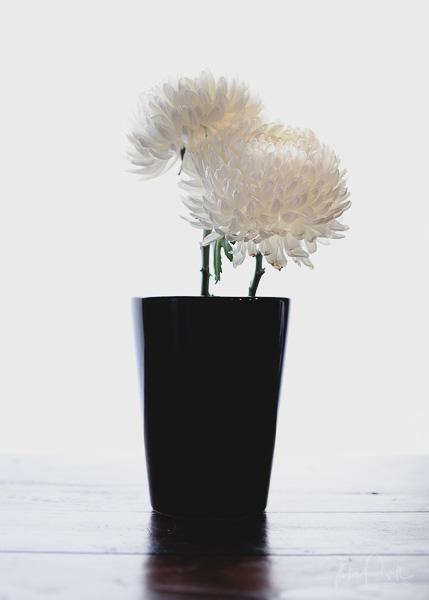 JuliePowell_Fading flowers-1