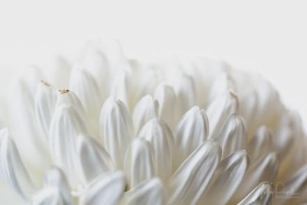 JuliePowell_Fading flowers-12