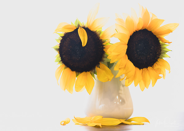 JuliePowell_Fading flowers-14