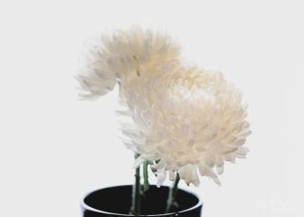 JuliePowell_Fading flowers-2