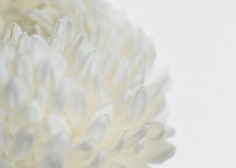 JuliePowell_Fading flowers-4