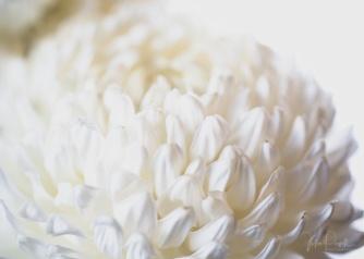 JuliePowell_Fading flowers-5