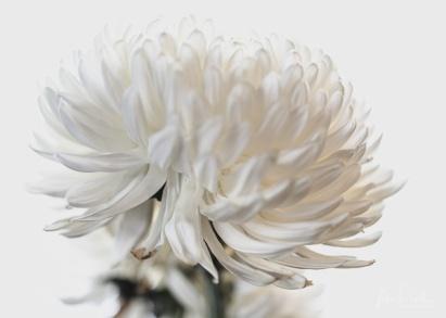 JuliePowell_Fading flowers-9