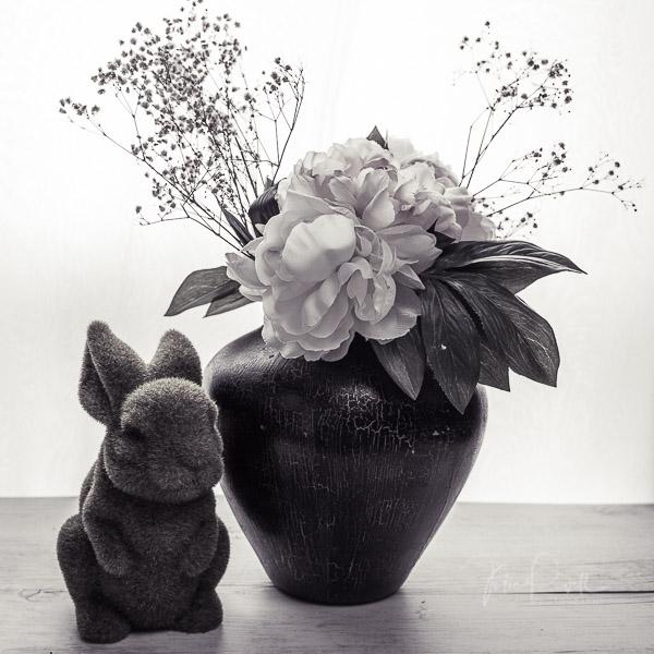 JuliePowell_Bunny-4