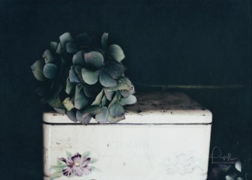 JuliePowell_Hydrangeas-12