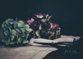JuliePowell_Hydrangeas-9