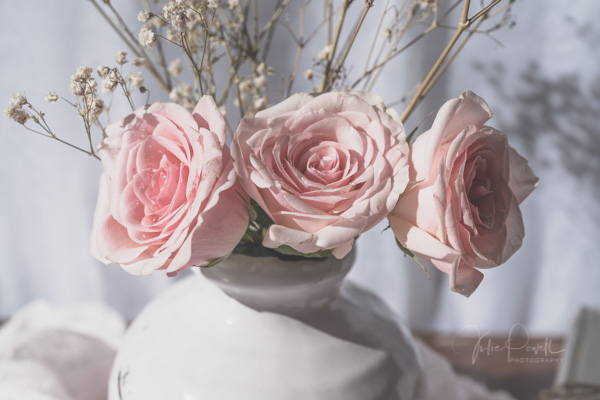 JuliePowell_Roses-14