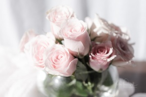 JuliePowell_Roses-2