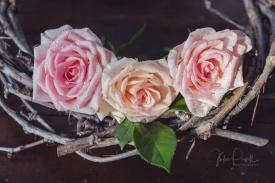 JuliePowell_Roses-20
