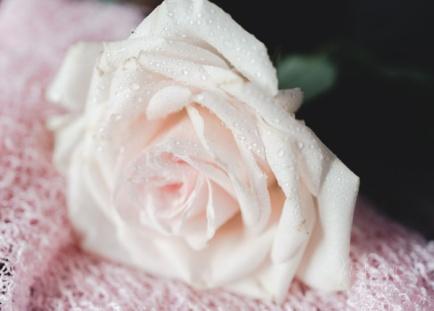 JuliePowell_Roses-3