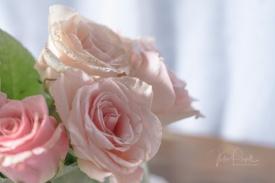 JuliePowell_Roses-8